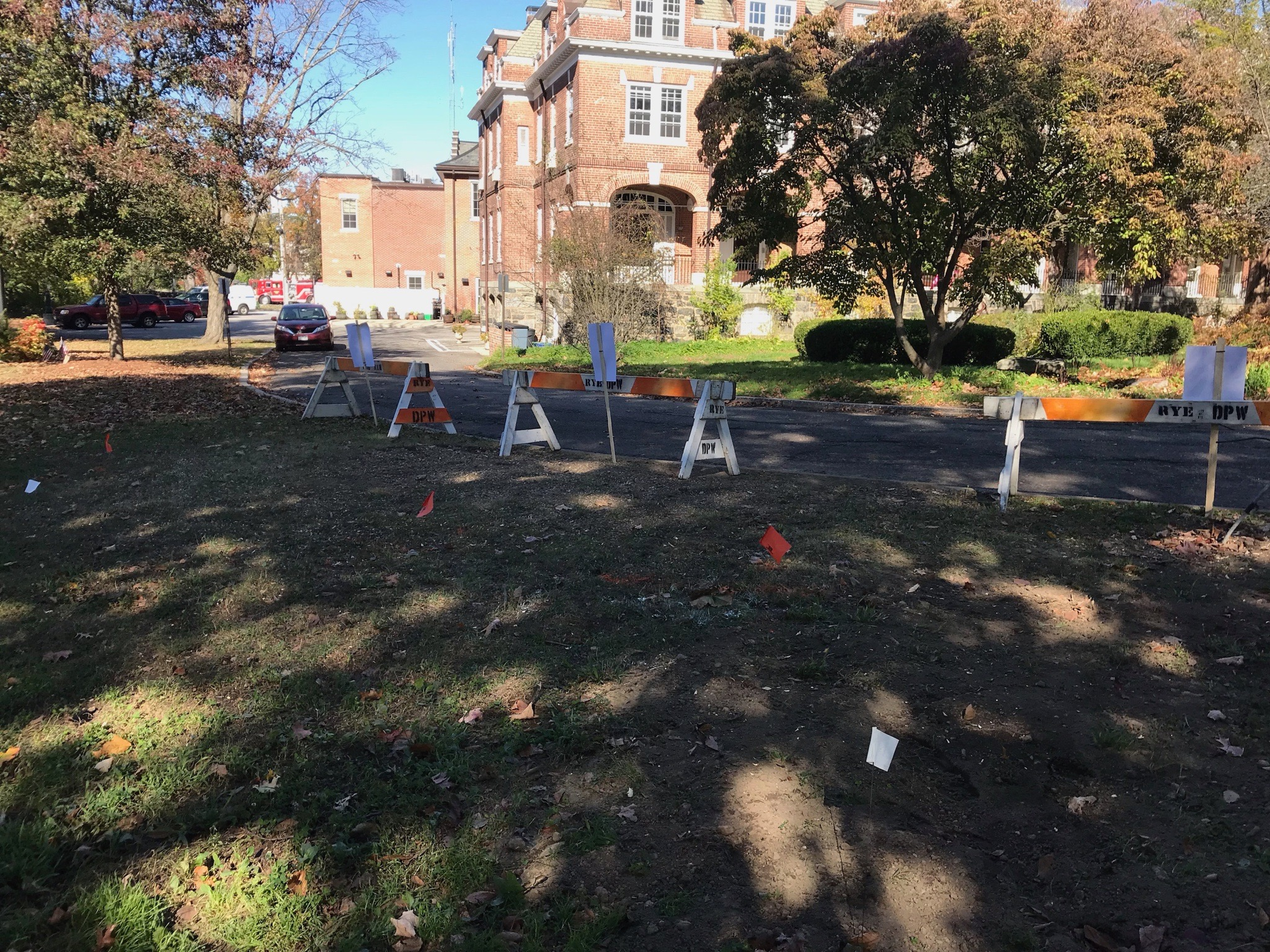 Village Green: White flags mark where Sugar Maple will be planted