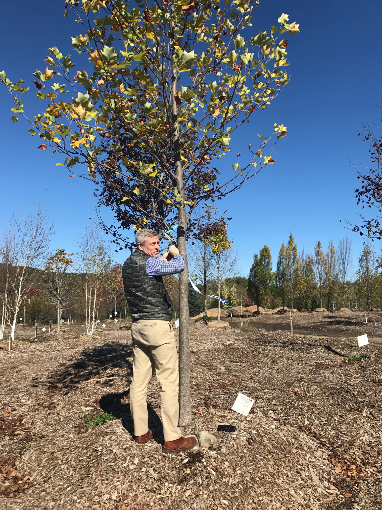 Hardscrabble Nursery: Christian tags a Tulip Tree slated for Disbrow
