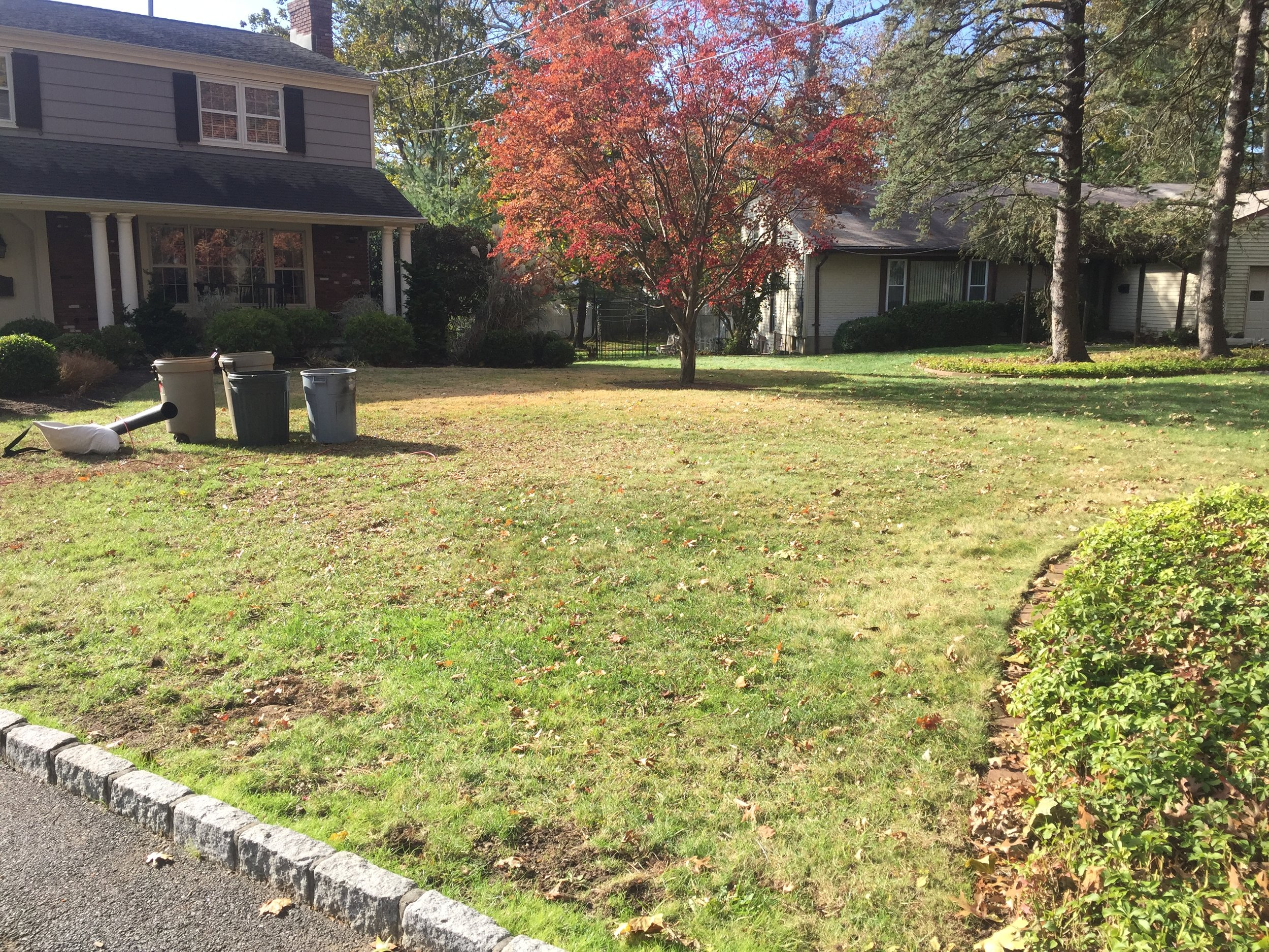 Mulched leaves on the lawn are virtually invisible