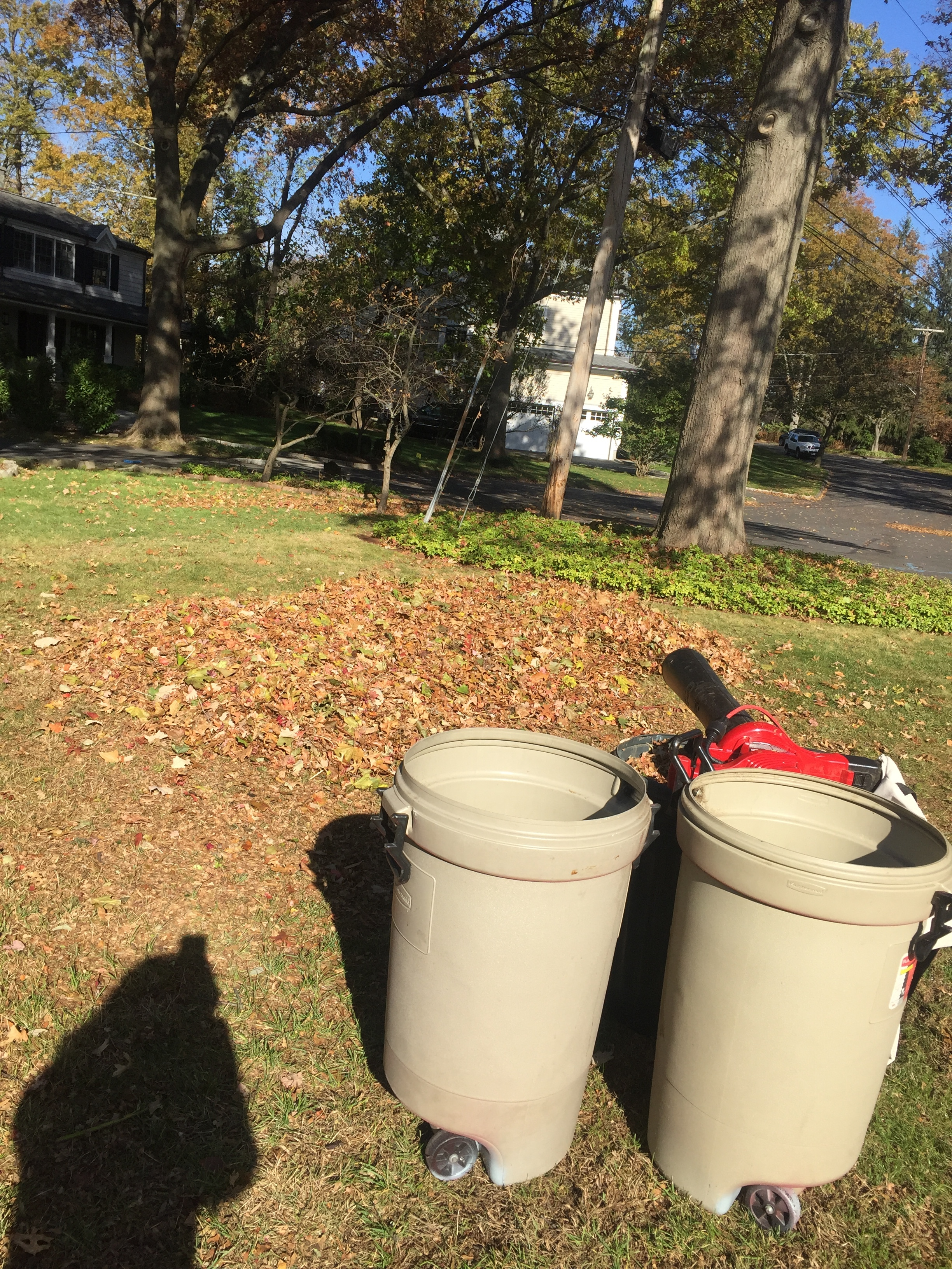 A leaf pile, ready to be mulched