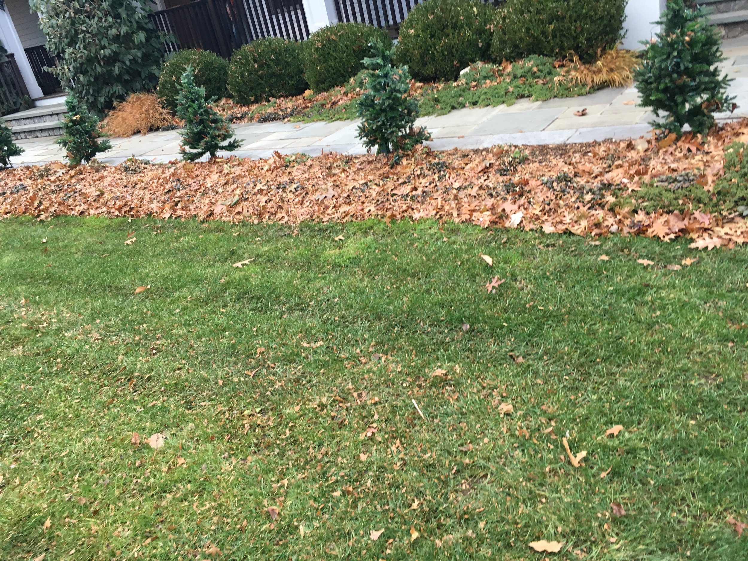 Mulched leaves fertilize lawns and flowering beds.