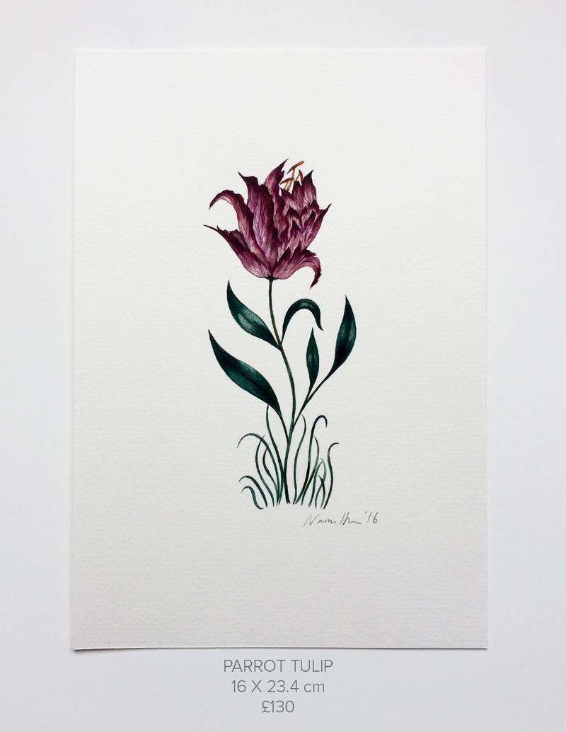 Parrot-Tulip.jpg