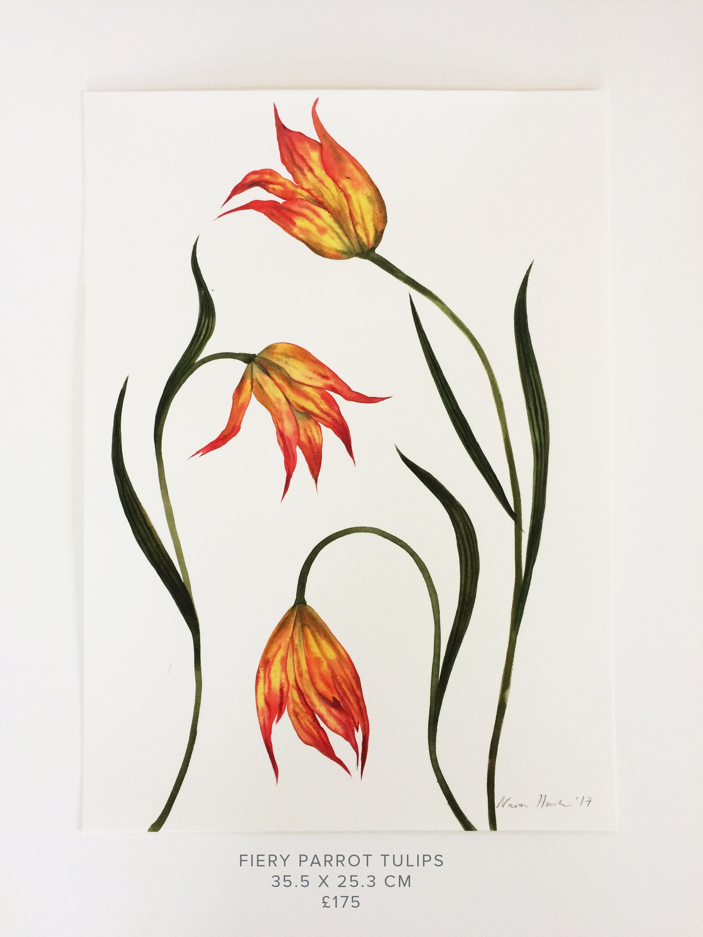 Fiery Parrot Tulips PS.jpg