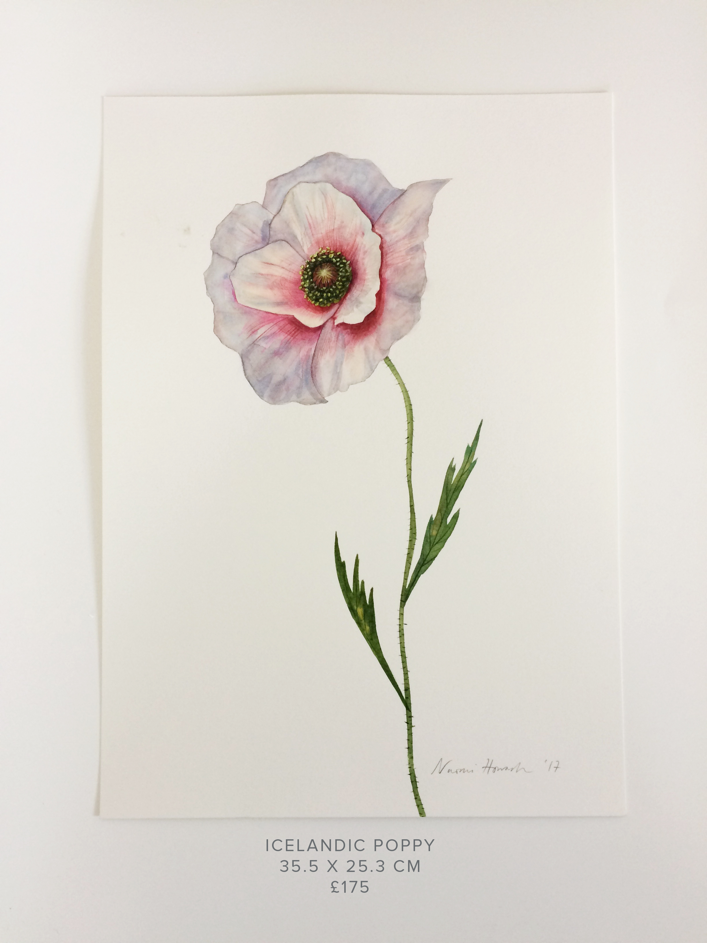 Icelandic Poppy PS.jpg