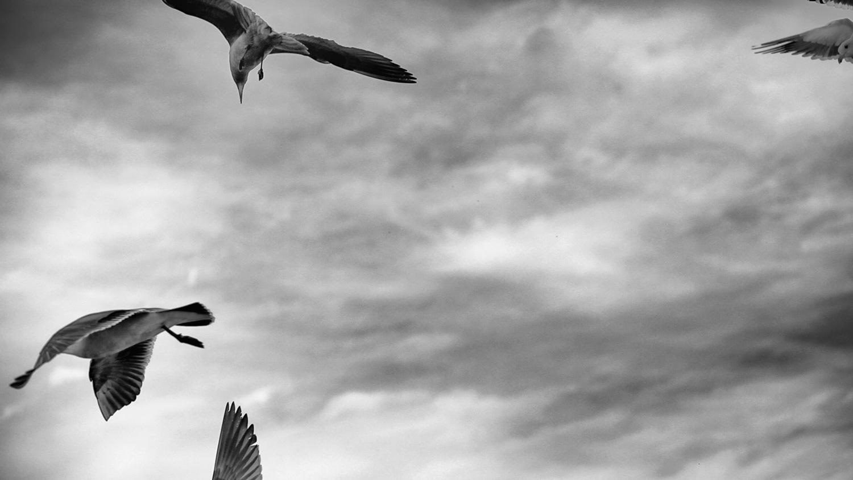 Jason Hooper Birds
