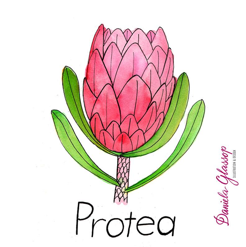 InktoberCB-Day11-Protea-DanielaGlassop.JPG