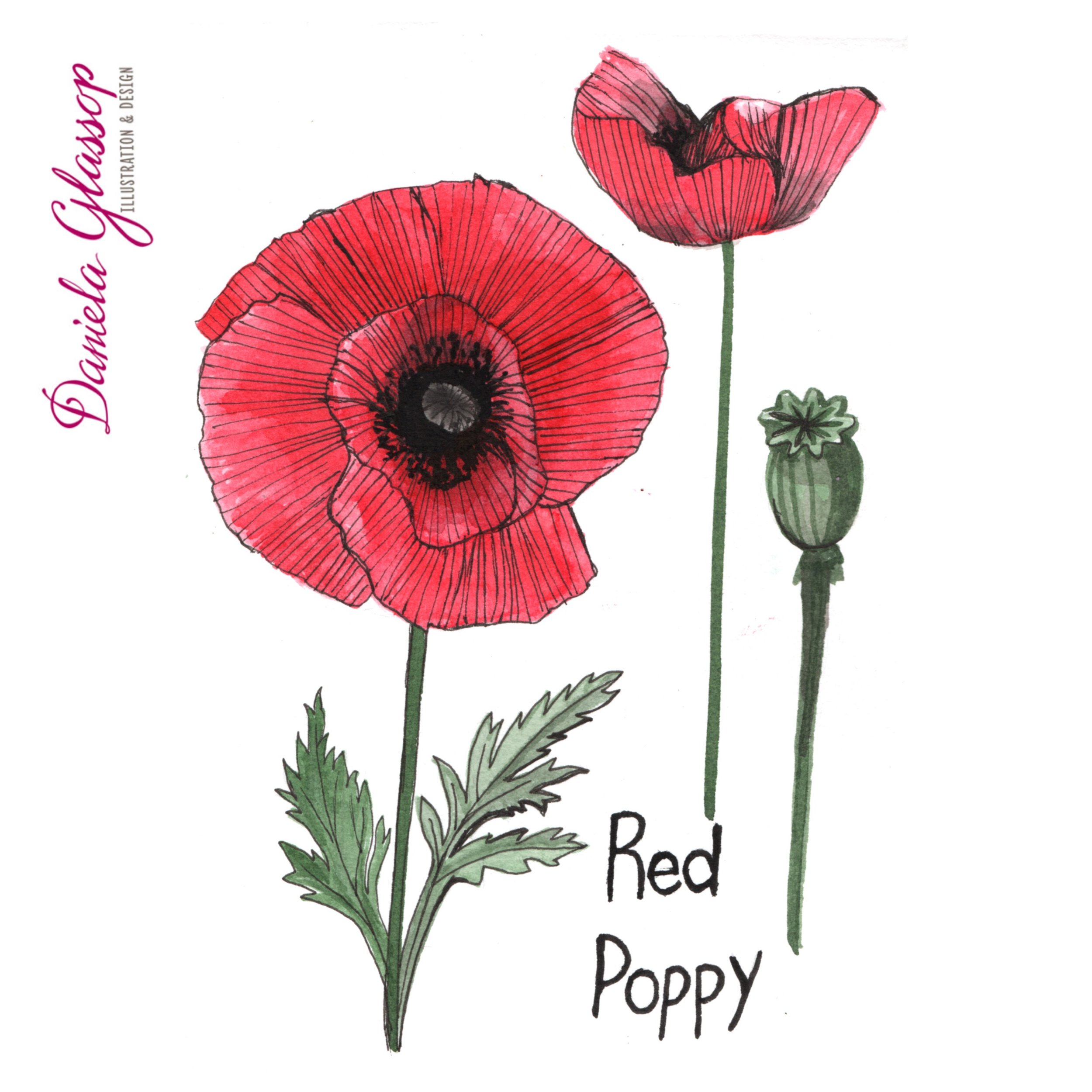 InktoberCB-Day10-RedPoppy.JPEG