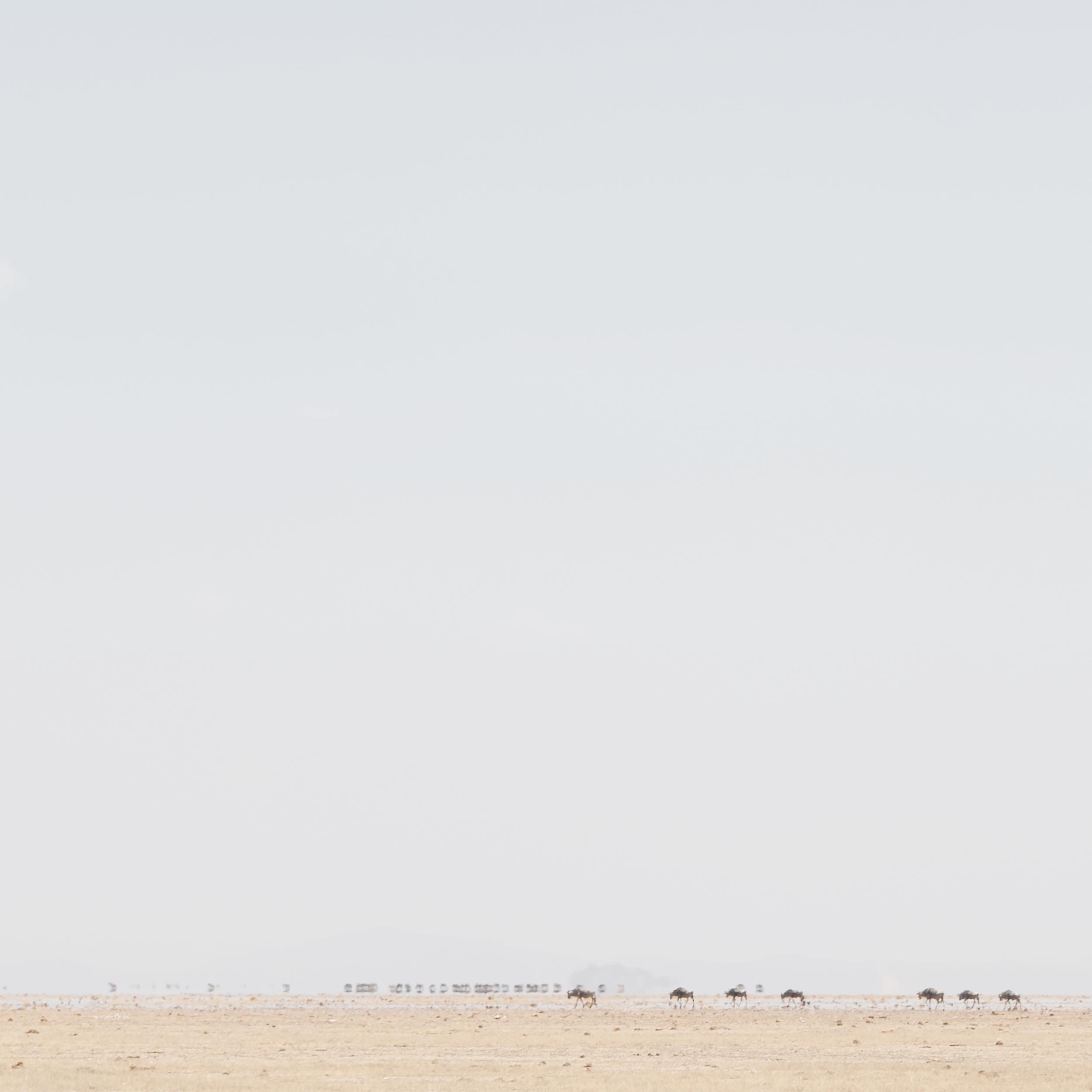 Wildebeest Herd in a Mirage 2, Amboseli, 2014