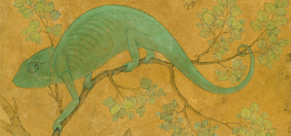 Mansur, Chameleon, c. 1595-1600 (detail). © Royal Collection Trust, England