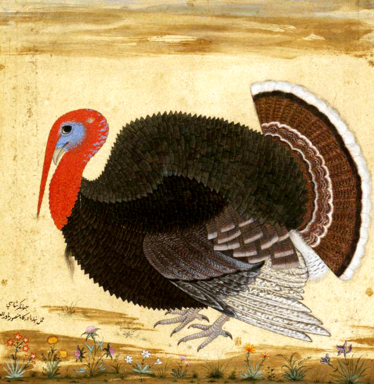 """From New Spain to Mughal India: Rethinking Early Modern Animal Studies with a Turkey, ca. 1612,"" in  Picture Ecology: Art and Ecocriticism in Planetary Perspective , edited by Karl Kusserow, forthcoming. New Haven: Yale University Press, 2020."
