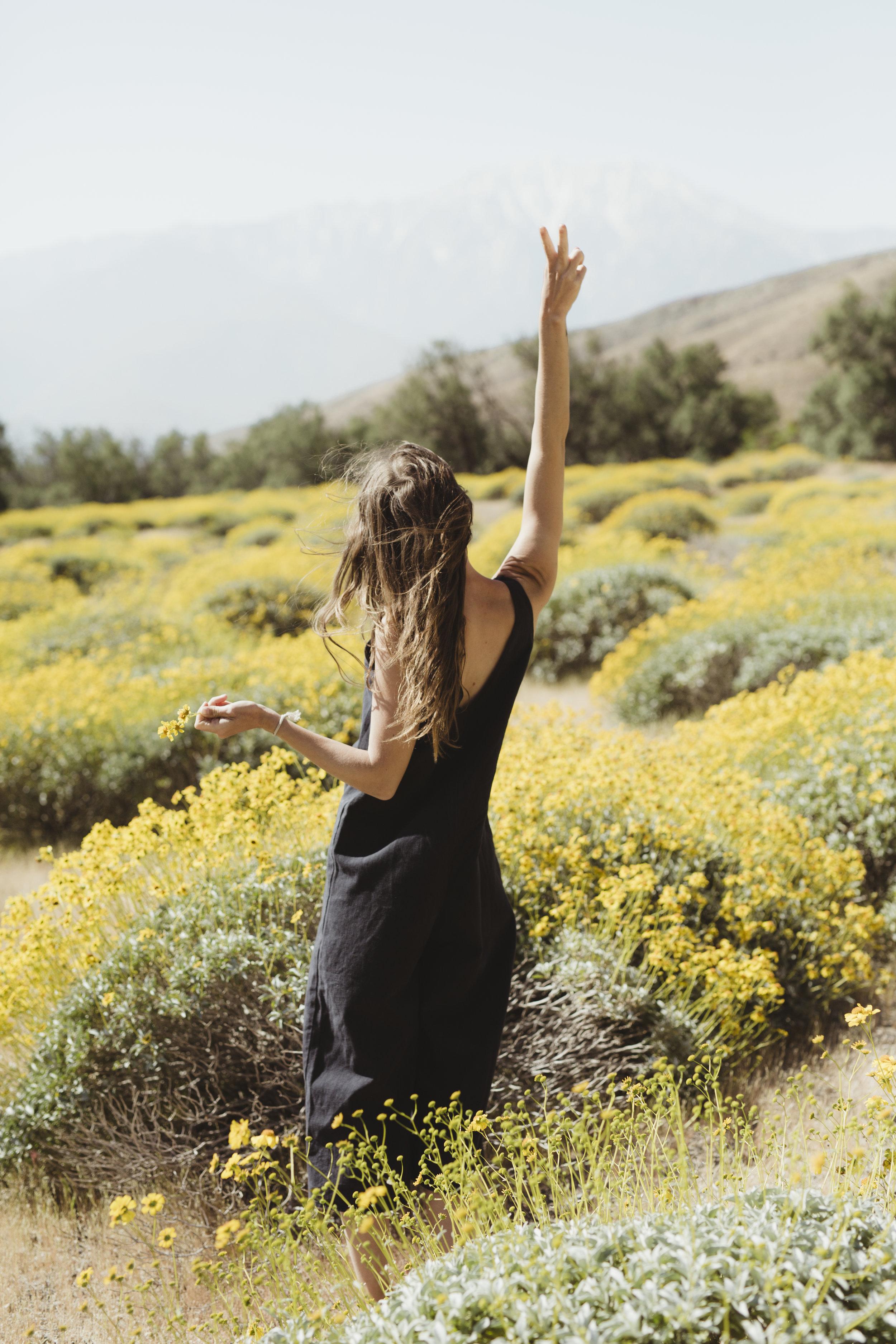 Joshua Tree California super bloom