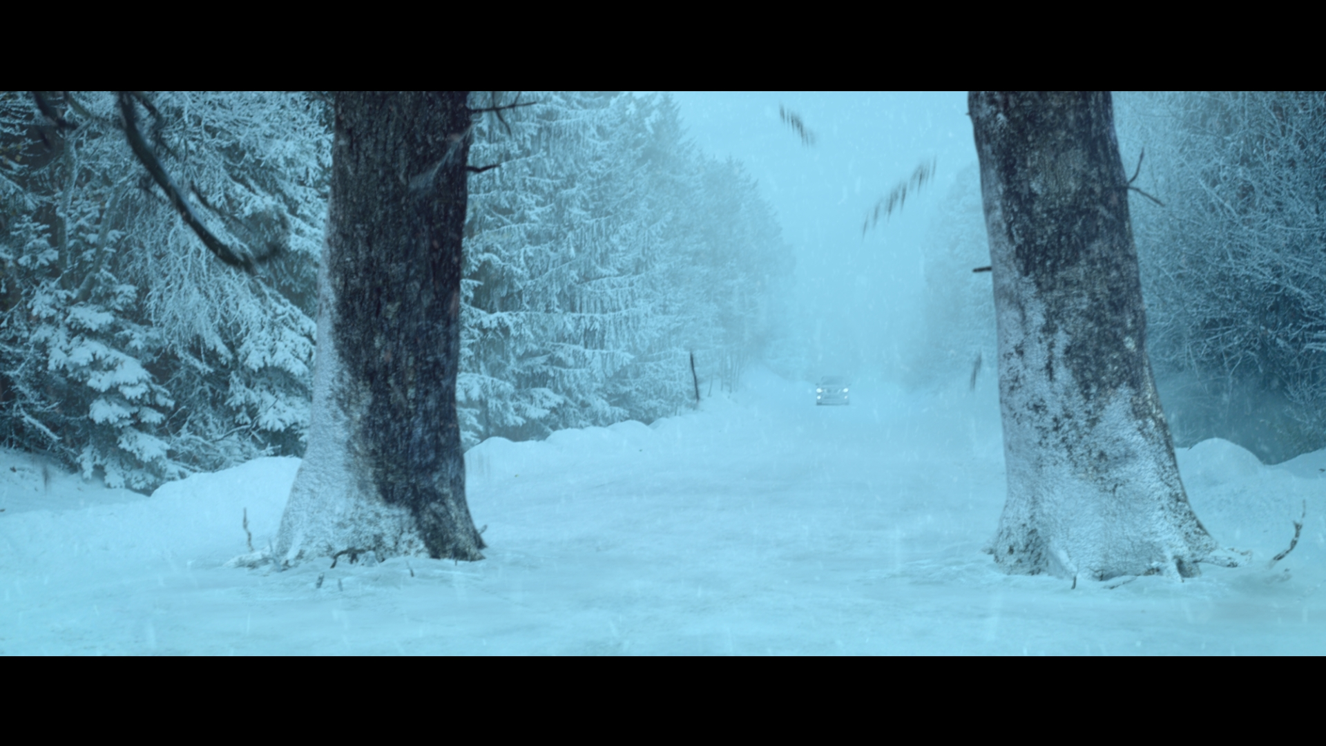 SNOWY_02.jpg