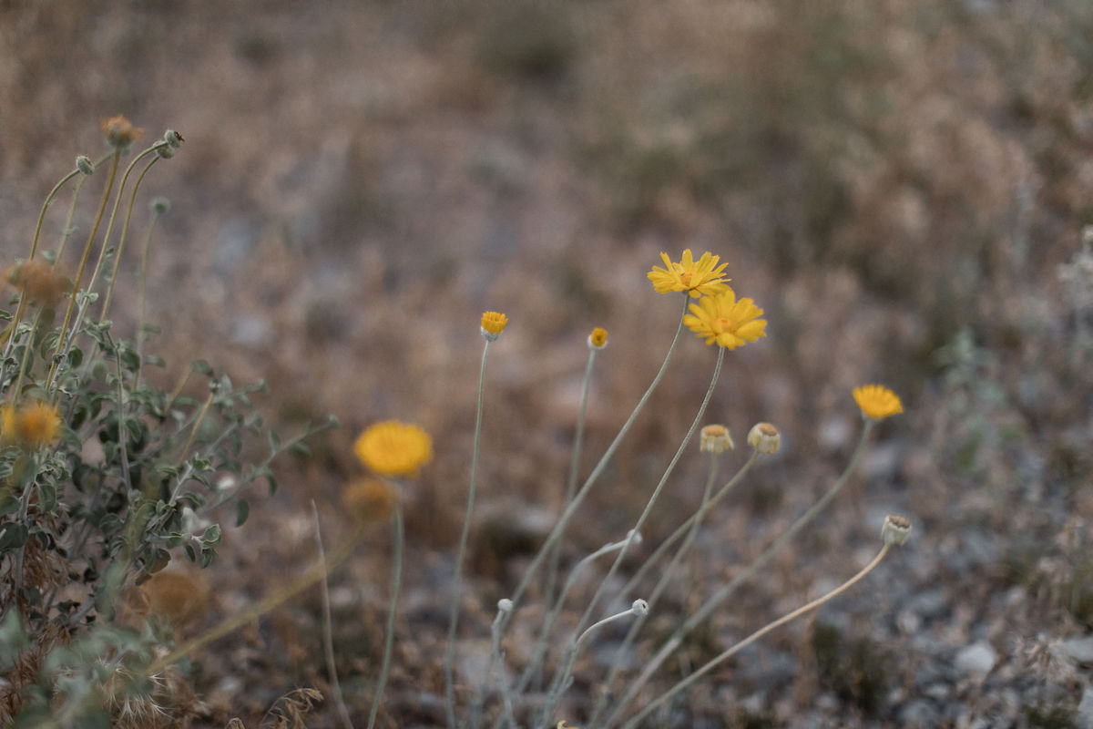 intimate red rock canyon elopement00010.jpg