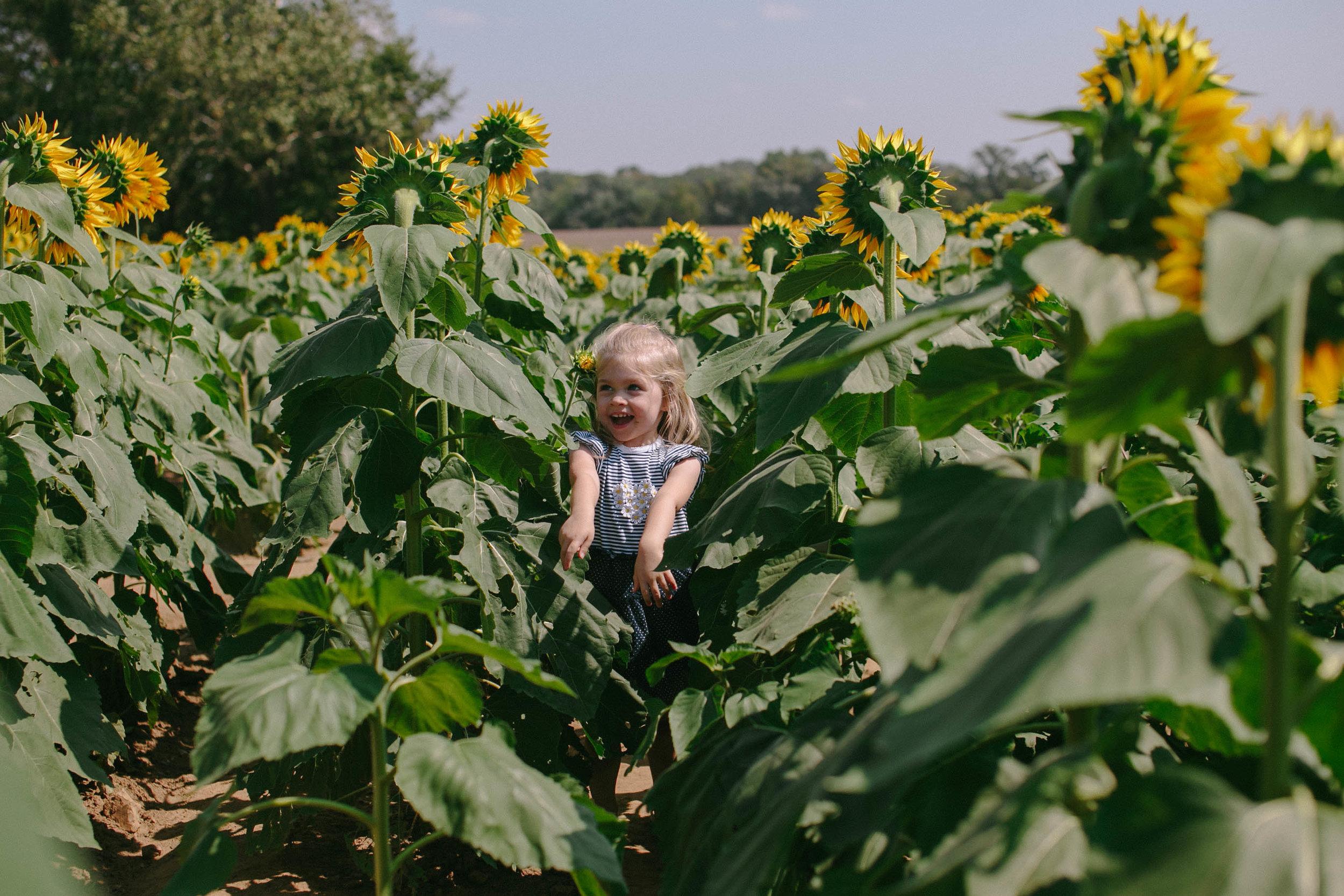 Destigter Family | Sunflowers 2016 | Hannahill Photography | Kansas City, MO