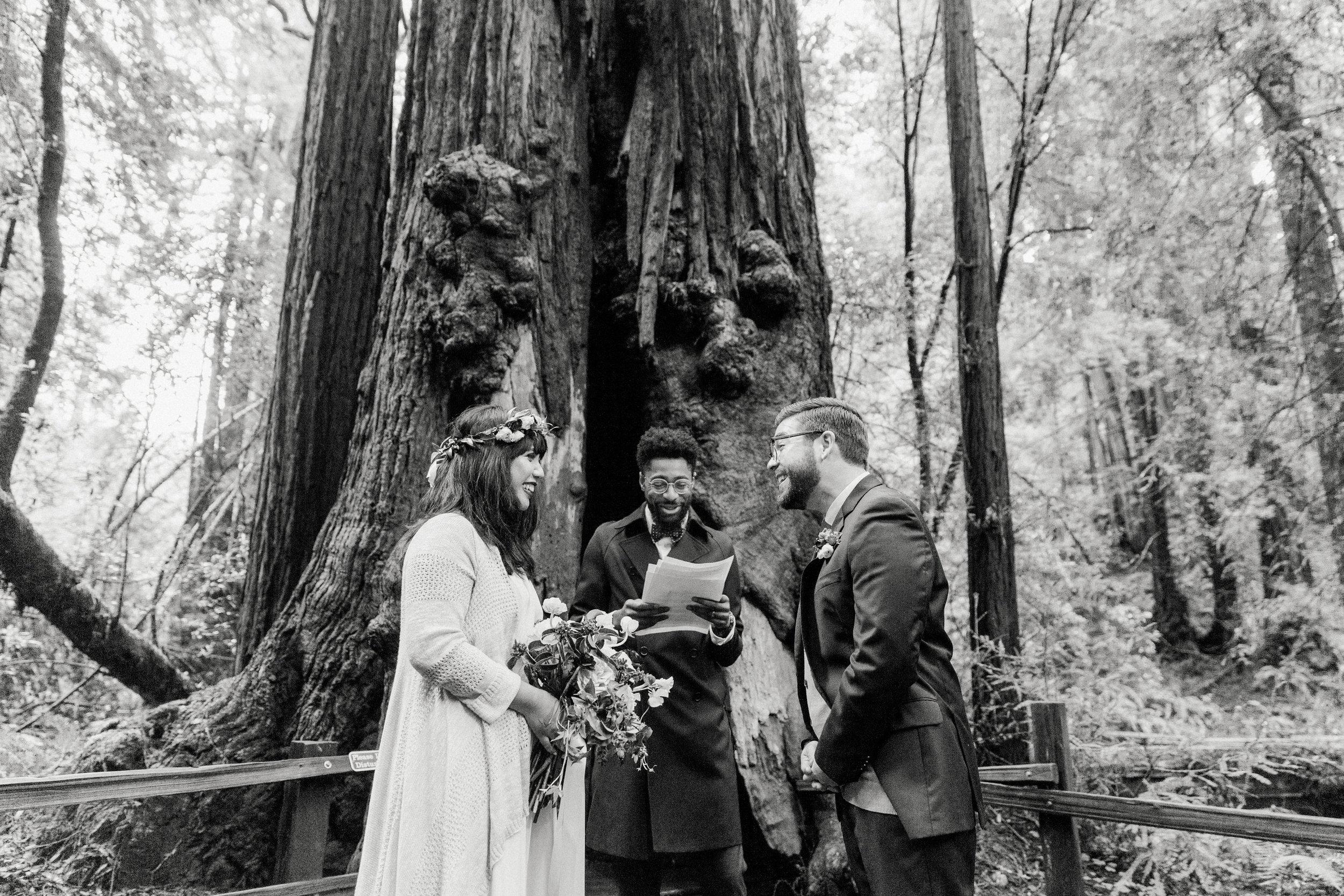 CA_Wedding_Muir_Woods_133.jpg