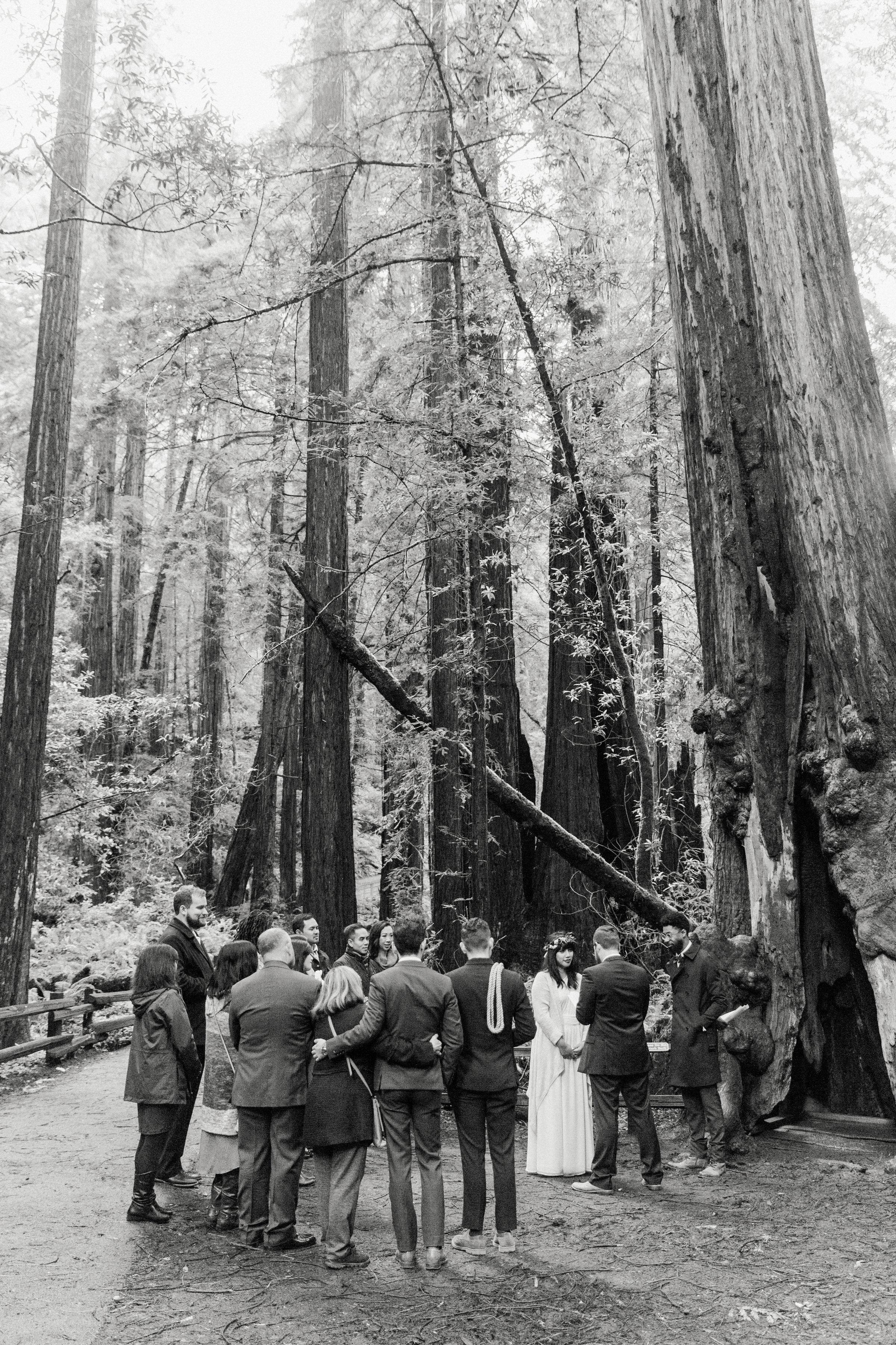 CA_Wedding_Muir_Woods_149.jpg
