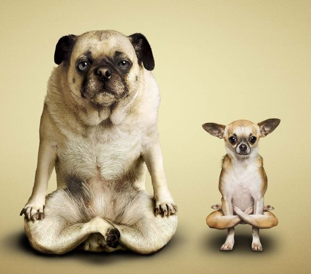 yoga-animal.jpg