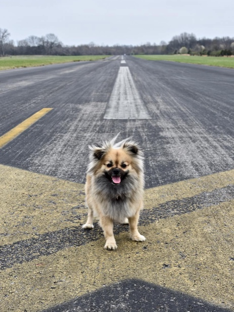 CORNELIA FORT AIRPARK - OUTDOORS - An abandoned airfield open to the public. It is the BEST location to take your pup for a walk. If the day is nice, bring a picnic.📷: @joebeecroft