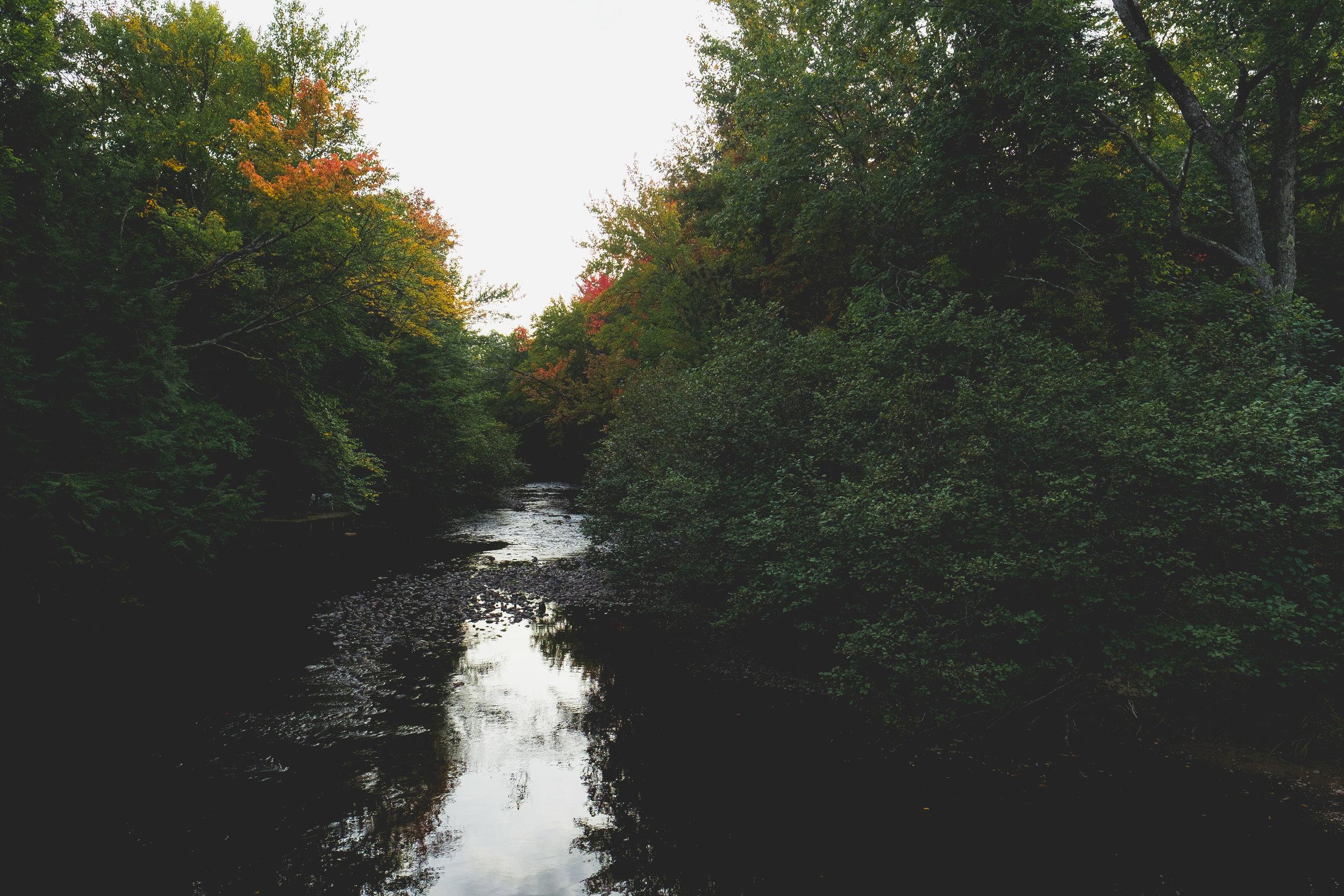Nature-4.jpg