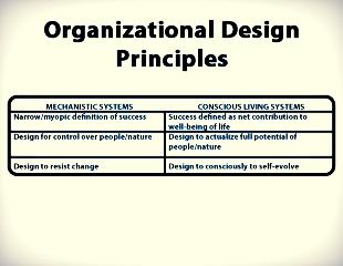 org design principles.jpg