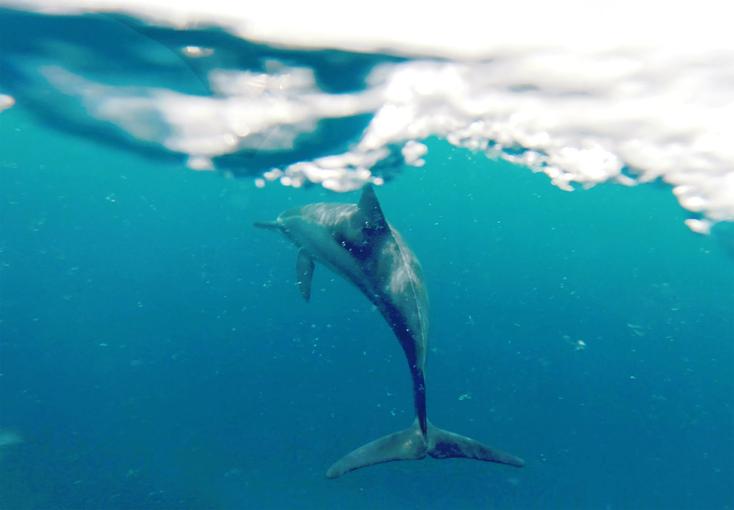dolphin copy copy.jpg