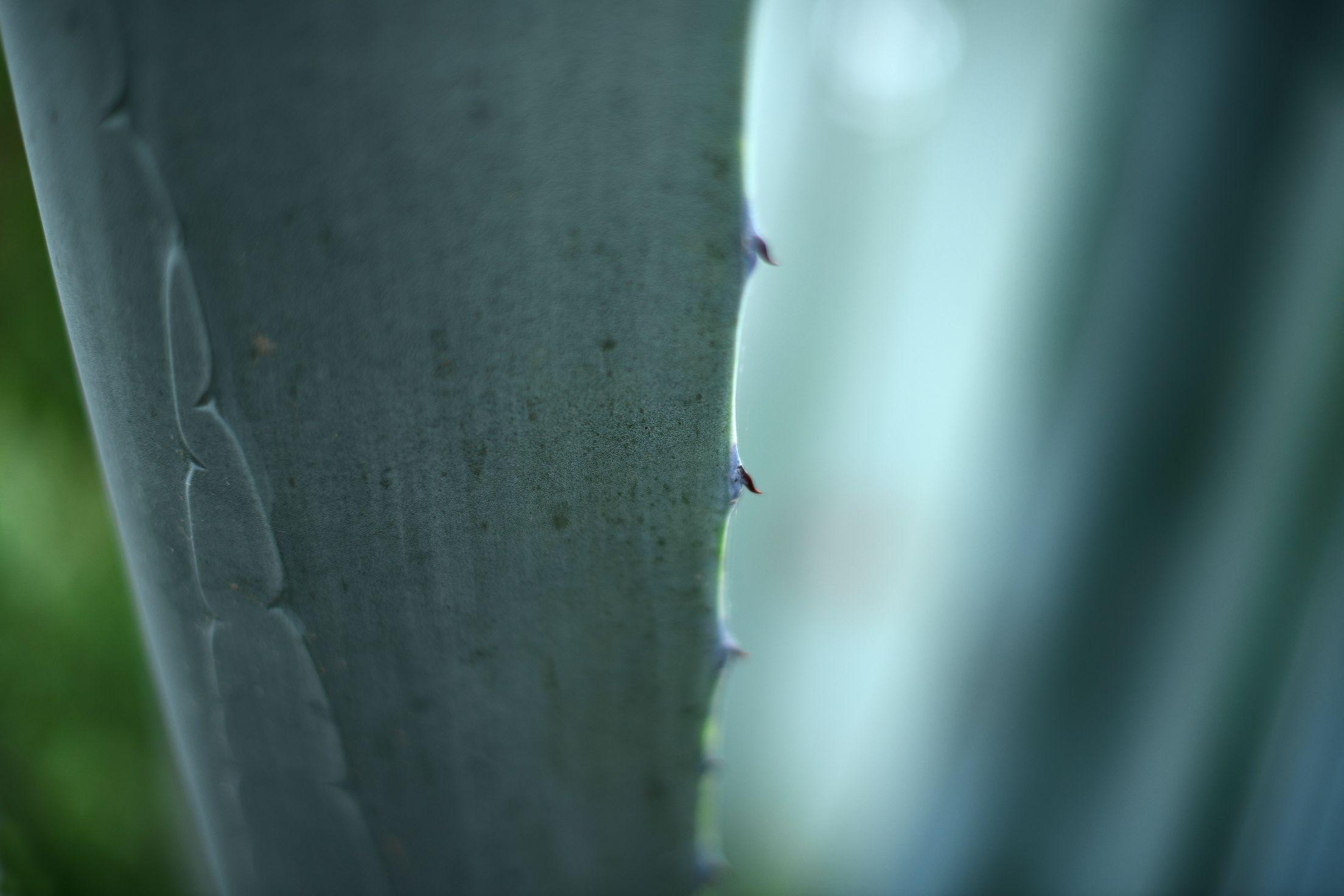 nature_2_cactus_aotearoa_2_2015-04-09 00.00.11.jpg