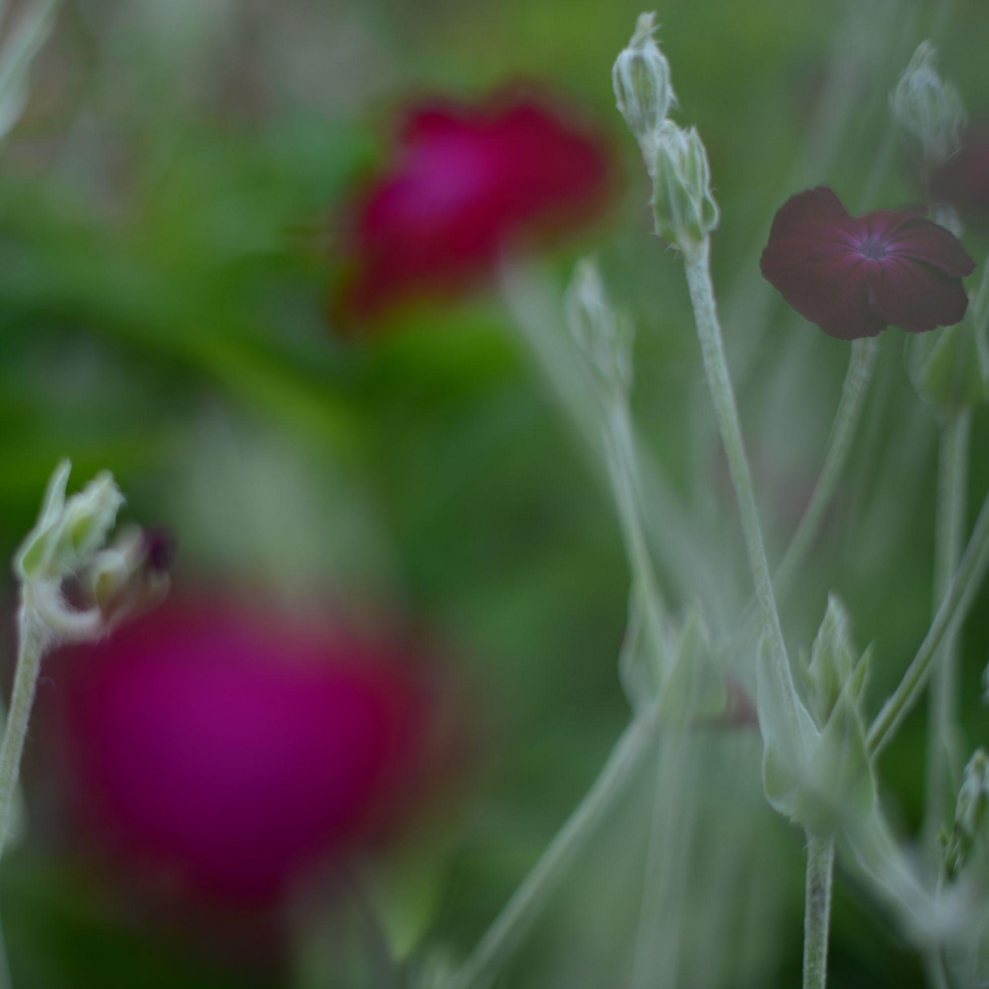 nature_flora_9_jardin_français_6.jpg