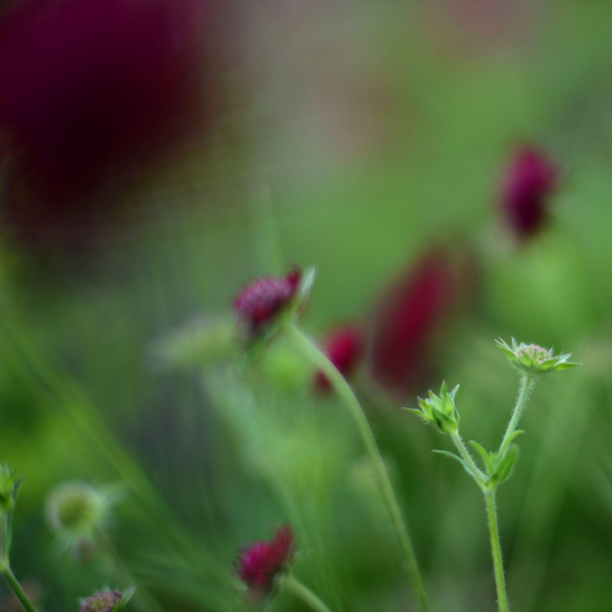 nature_flora_9_jardin_français_7.jpg