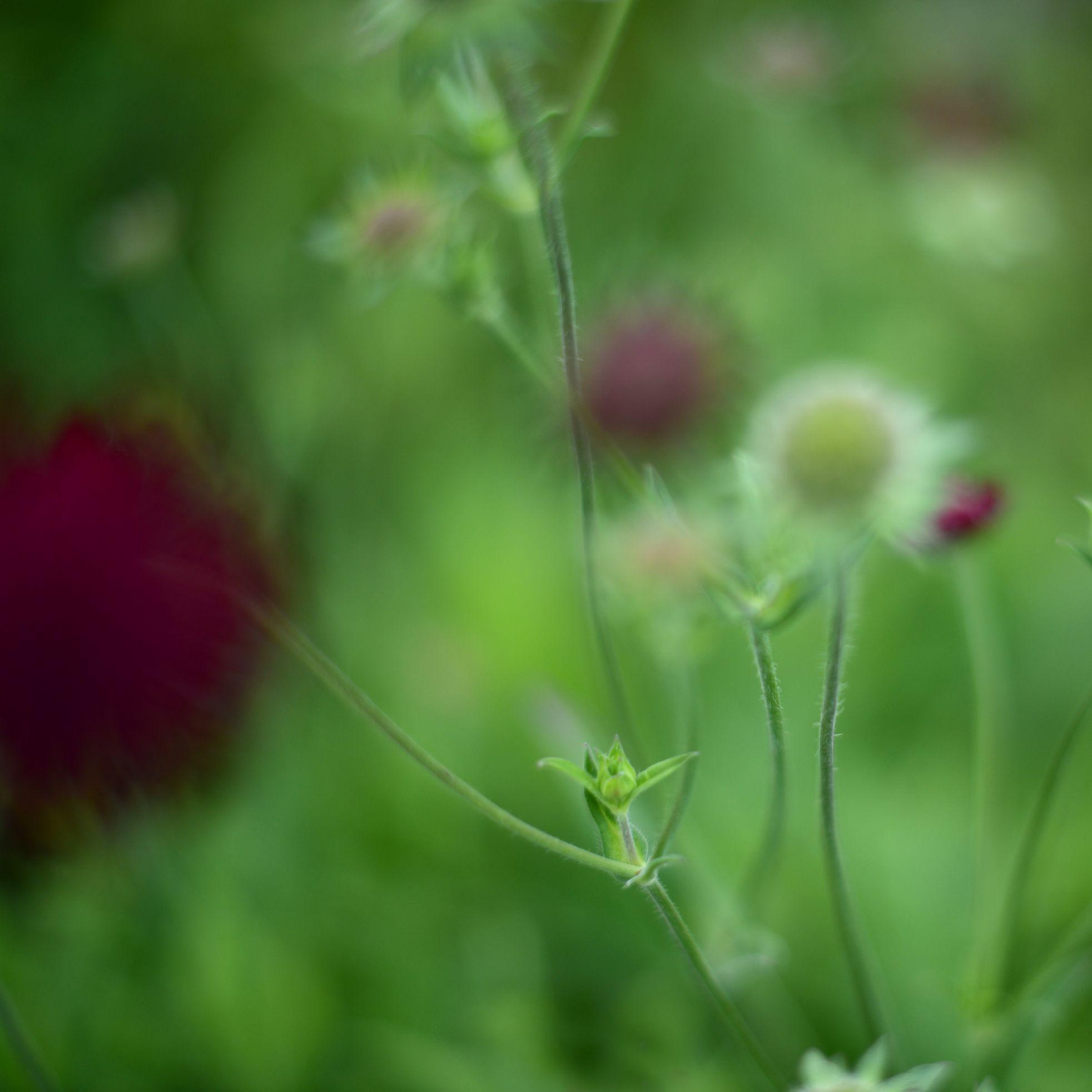 nature_flora_9_jardin_français_9.jpg