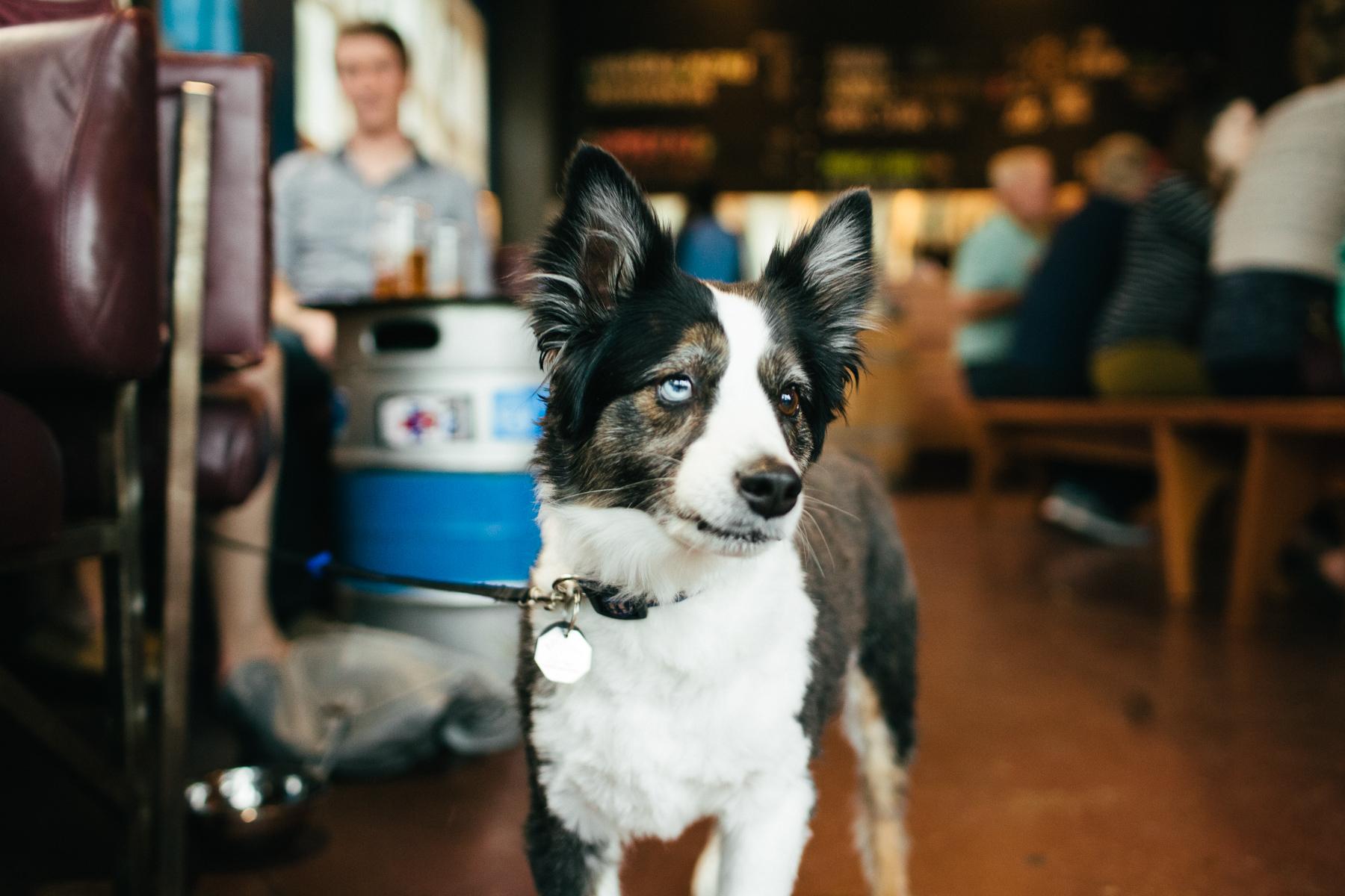 U.B.G. customer's dog