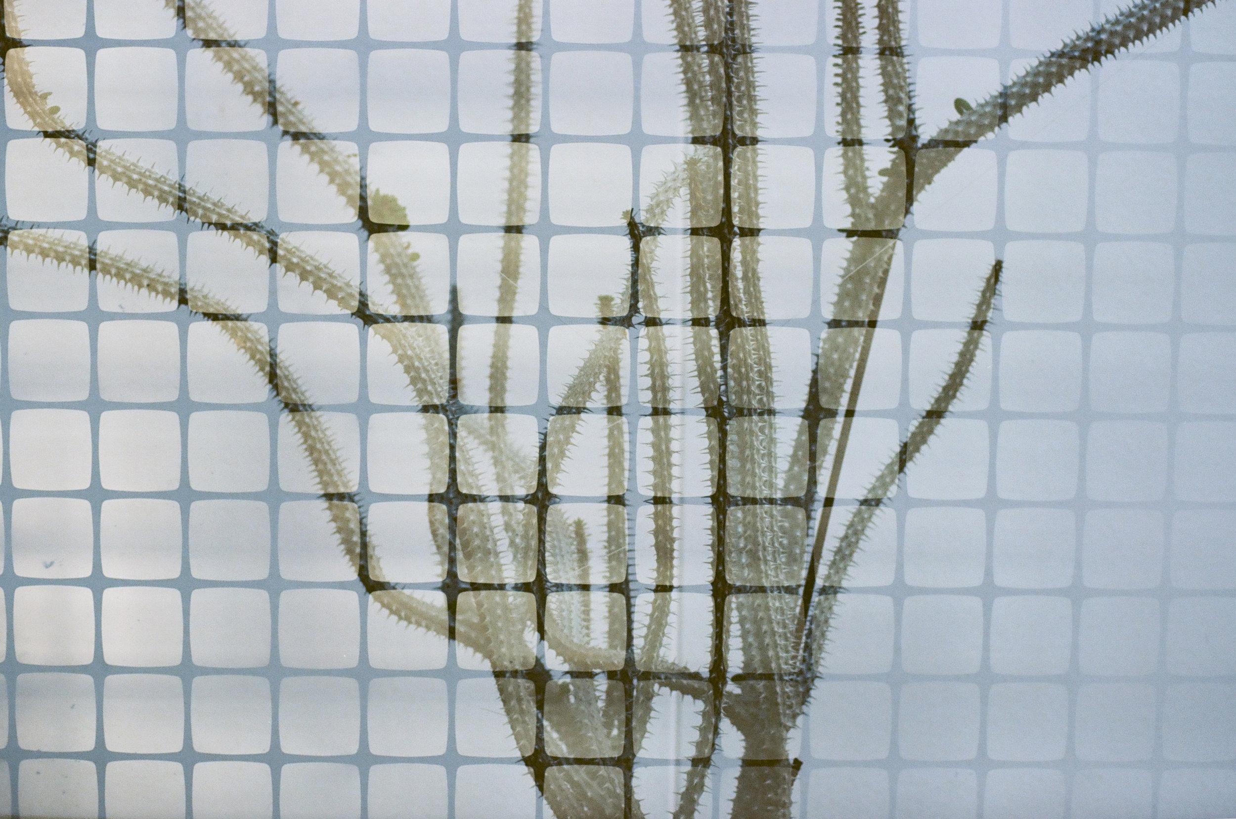 cameliamanea-film-double-cactus-grid.jpg
