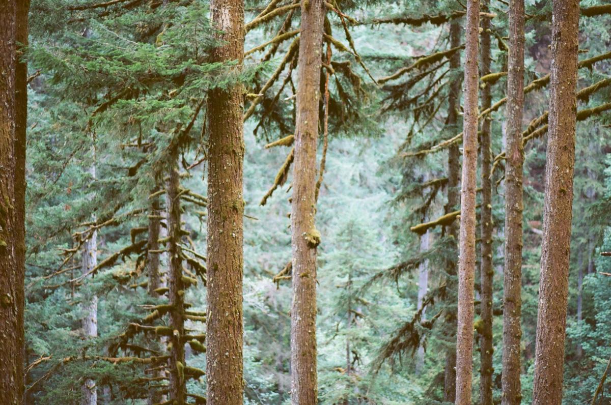 cameliamanea-forest-trees-update.jpg