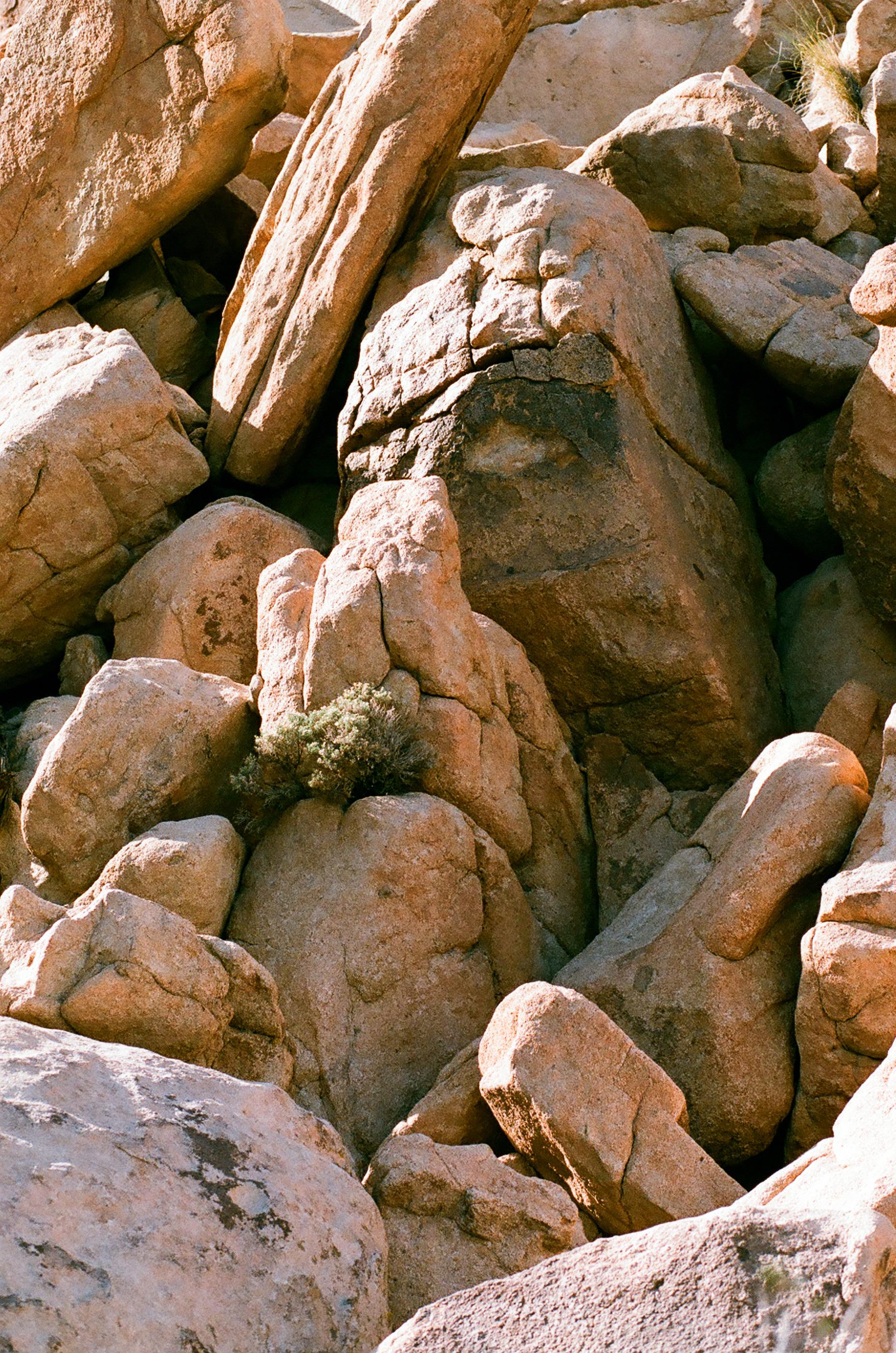 cameliamanea-jtree-rocks05.jpg
