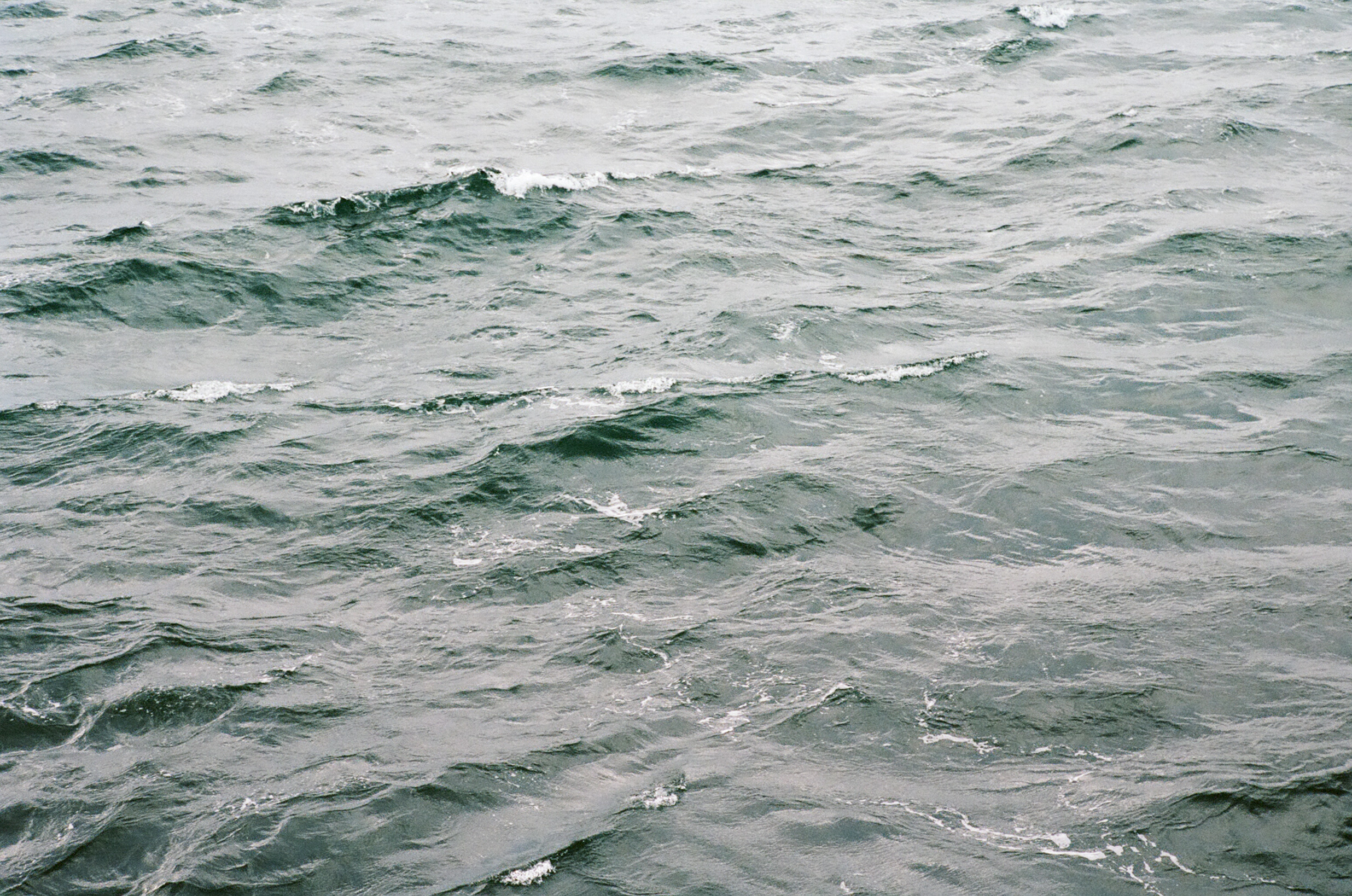 seattle-water-ferry-cameliamanea.jpg