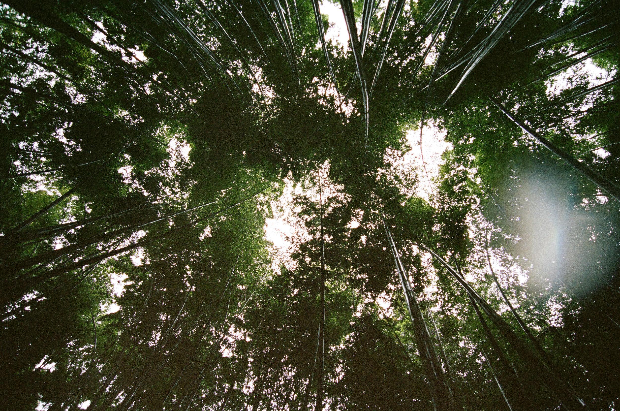 bamboo-forest-Tokyo-4-cameliamanea.jpg