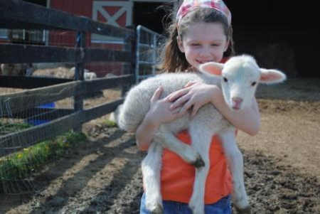 A small girl cares for a helpless lamb.