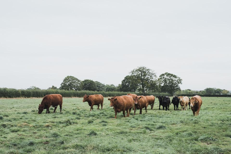 SarahMasonPhotography_commercial photography yorkshire farming