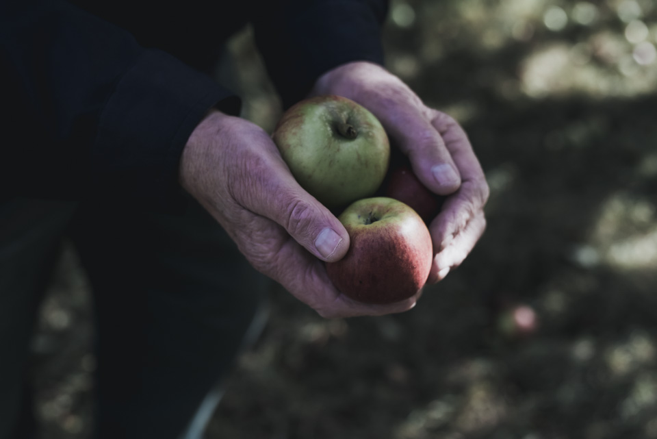 SarahMasonPhotography_commercial+photography+yorkshire+farming.jpeg