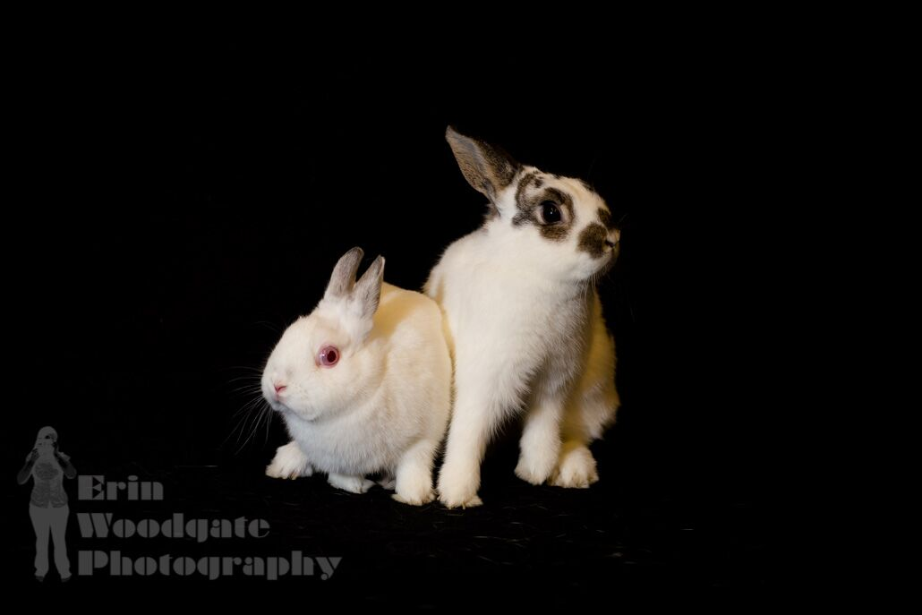 Flash & Mopsy - Adoptable Pair (Photo credit: Erin Woodgate Photography)