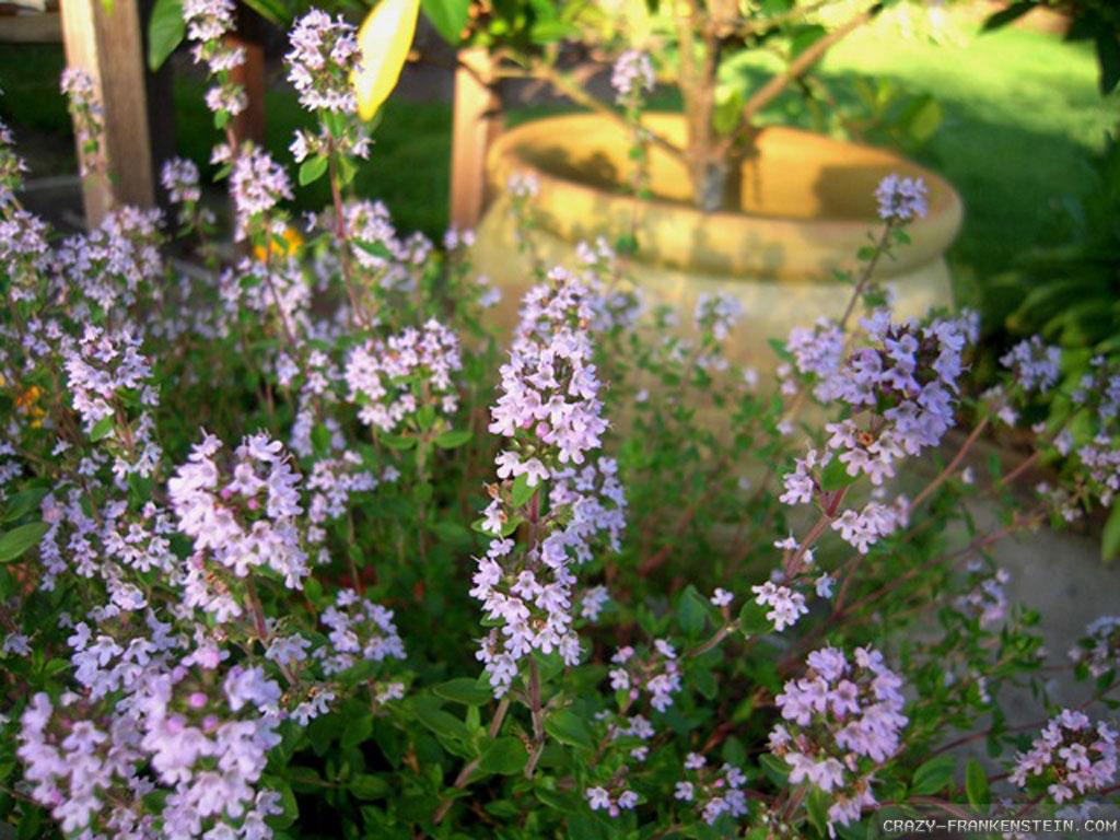 herbs-wallpapers.jpg