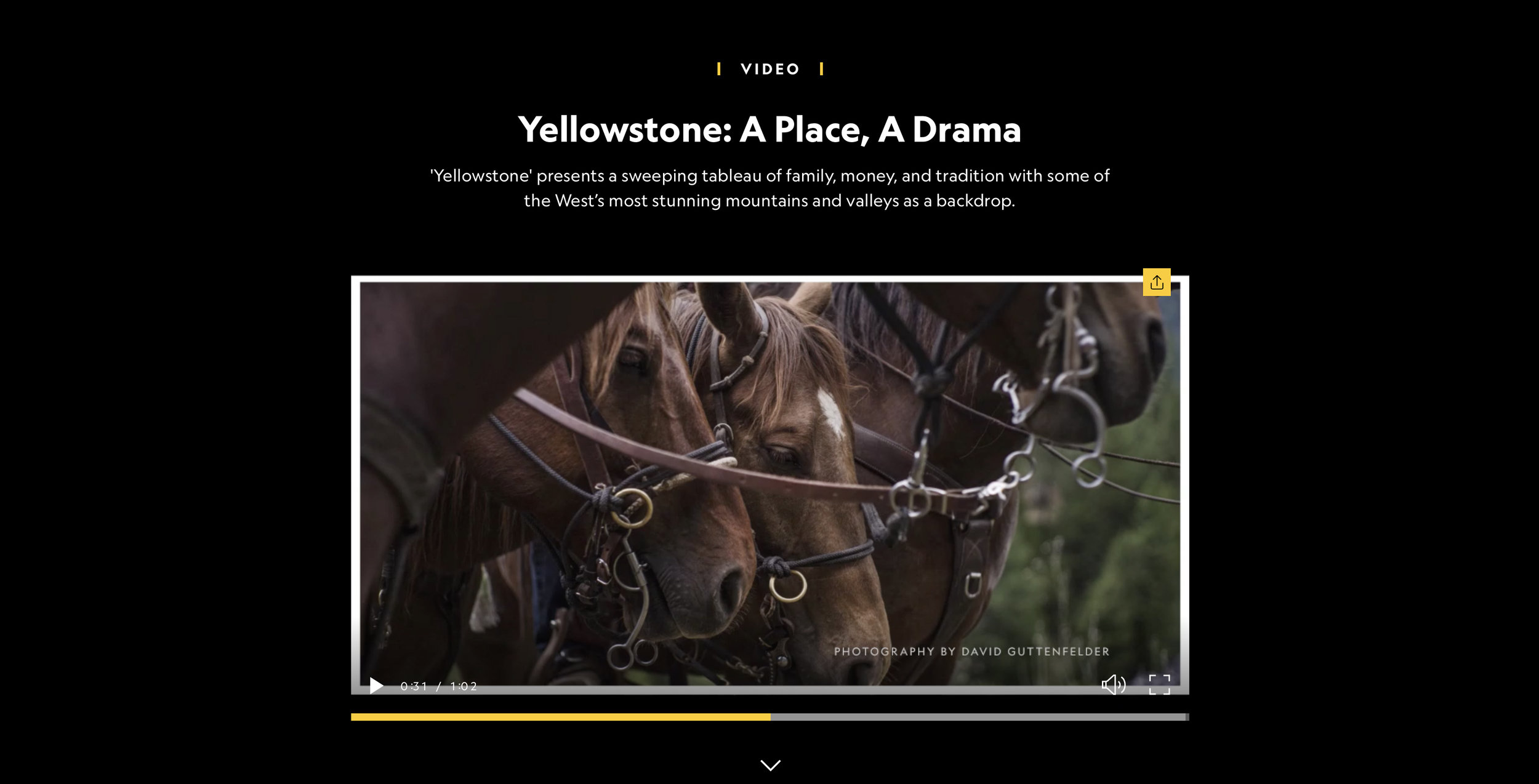 Yellowsonte_Paramount_03.jpg