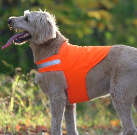 Flea Tick Prevention For Dogs