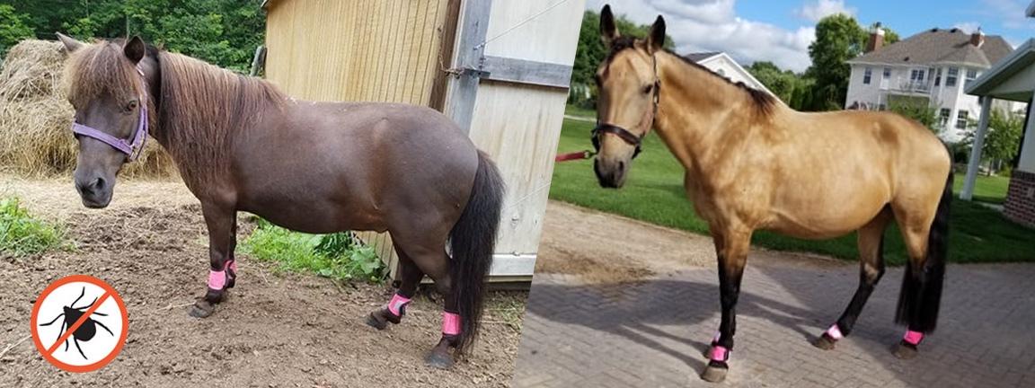 Tick Repelling Horse Gaiters