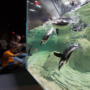 Dive bombing with the penguins at Greensboro Science Center. Image credit: Cambridge Seven Associates, Inc.