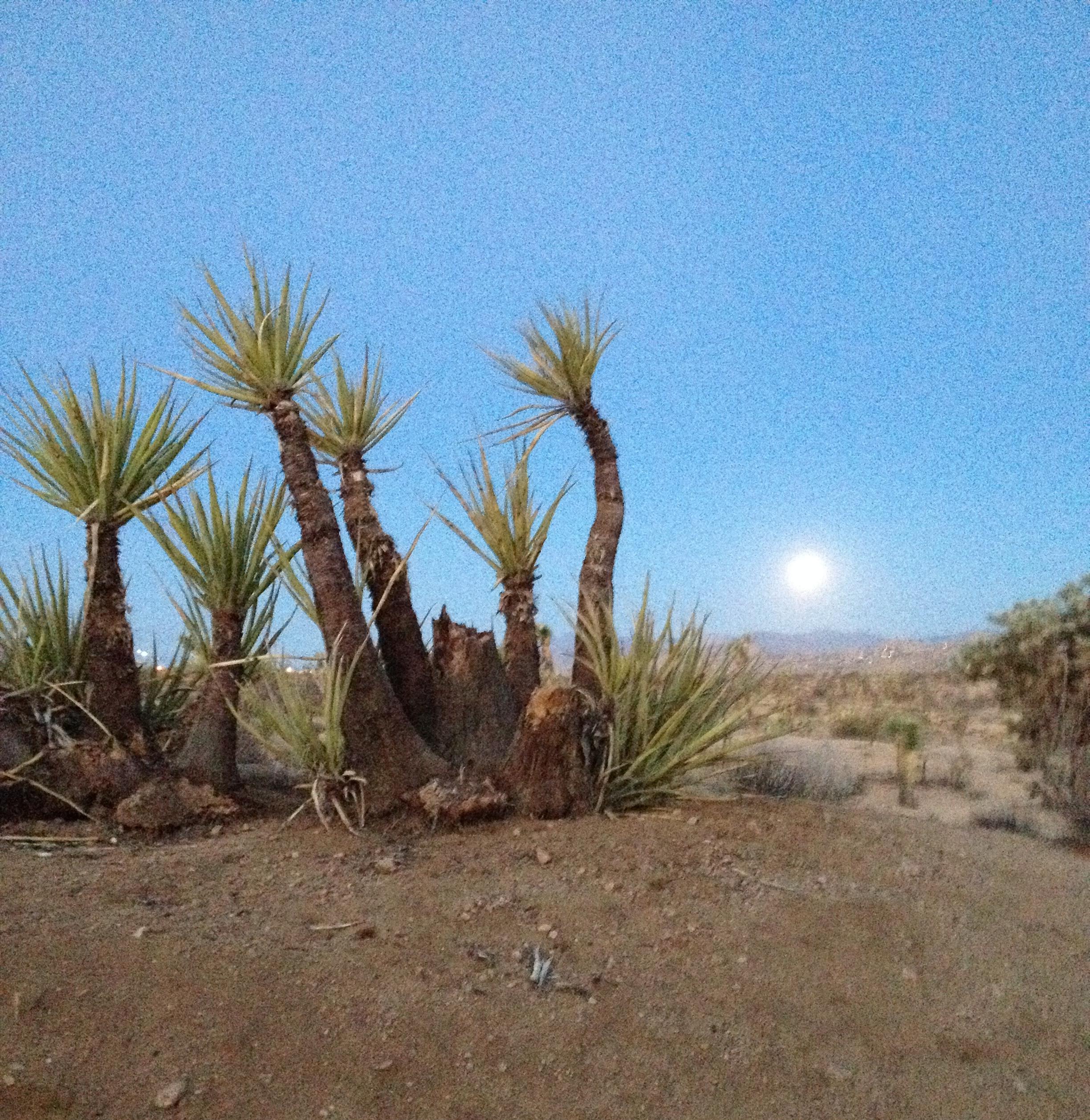 Moon setting. Oct 8, 2014 6:30am