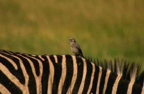 bird+zebra.jpg