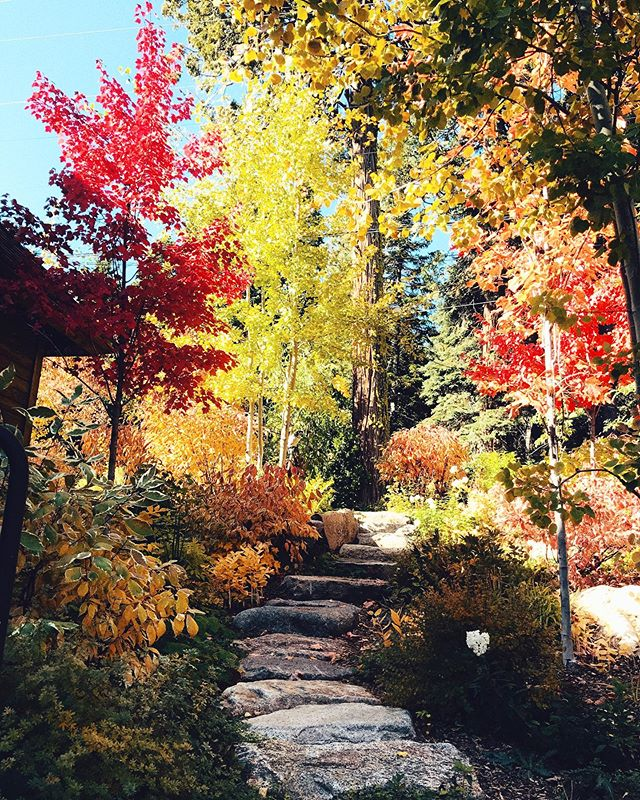 FALL in love (get it 😉😉) with Tahoe and stay at Cedar Crest Cottages! 🍂🍁 Book 3 nights or more and get 20% off your entire stay.  Offer valid from October 11th to November 25th, 2019.  Link in profile! . . . . . . #laketahoe #westshoretahoe #fall #thecolorsoffall #vacation #hotel #vacationrental #tahoe