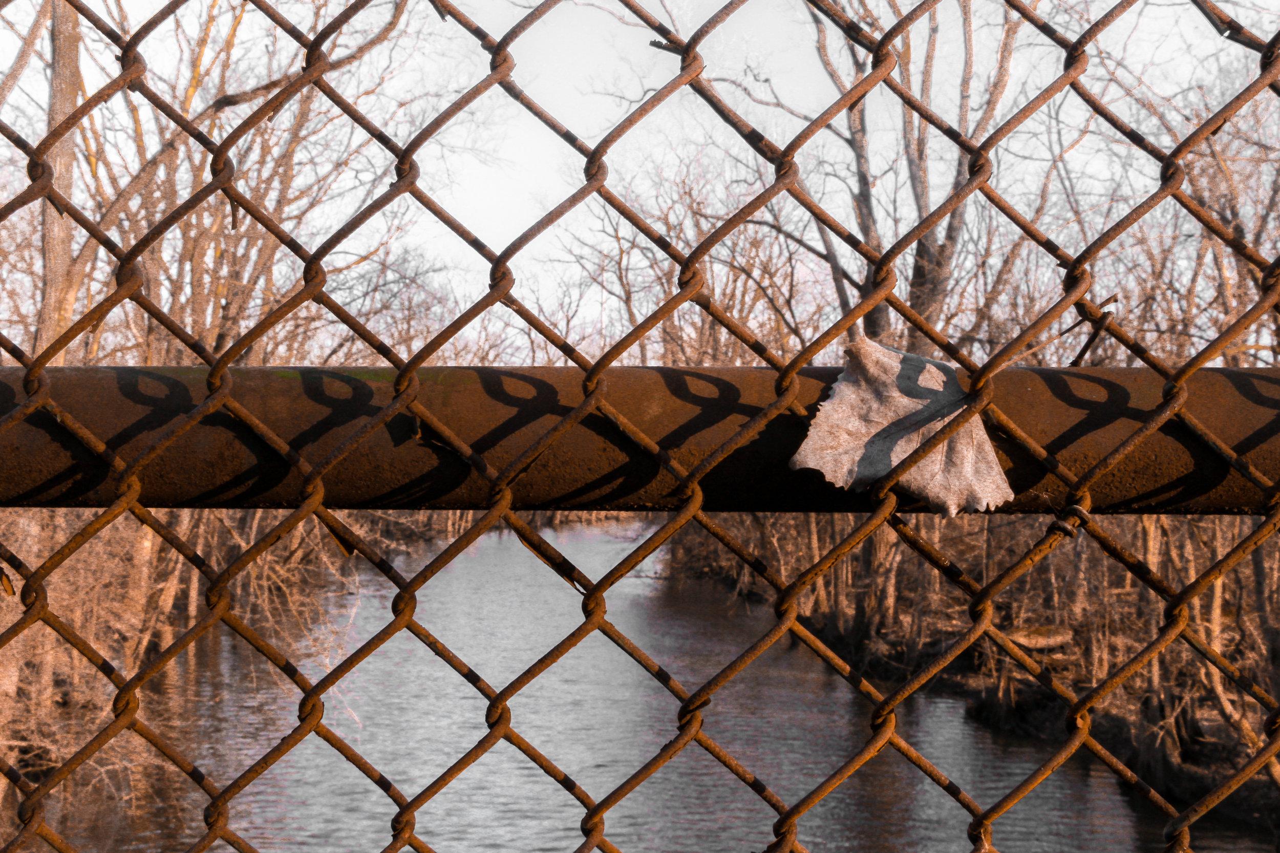 WatersmeetWoods©DanMohr2019.jpg