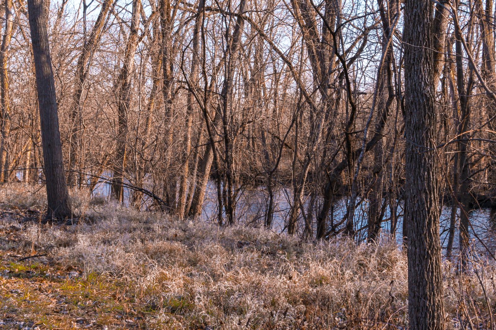 WatersmeetWoods©DanMohr2019-3.jpg