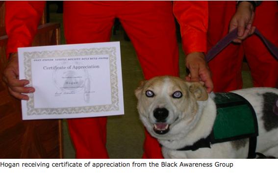 Therapy dog, Hogan